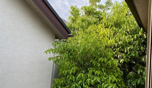 庭木が屋根まで伸びてお手上げ!伐採業者の探し方