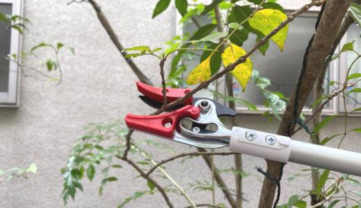 庭の木が二階まで伸びた!軽い高枝切りばさみを使って自分で剪定してみよう