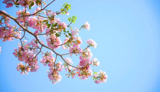 【まとめ】子宮頸がんによる広汎子宮全摘手術後~現在までの体調の変化
